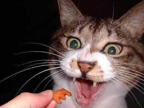 キャットフードを食べる猫の表情が・・・