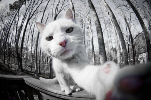 iPadで自撮りする猫たち(写真5枚)