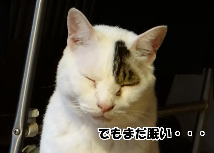 【犬猫日記】寝る猫。起こす猫。