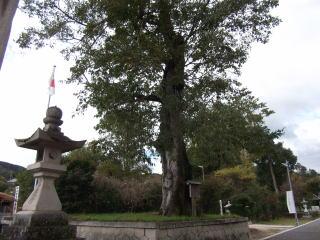 中山神社のムクノキ