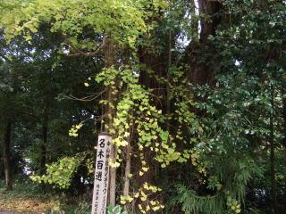 中山神社のイチョウ
