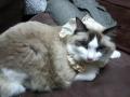 cat2014020700.jpg