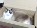 cat2014021000.jpg
