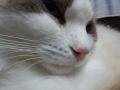 cat2014031000.jpg