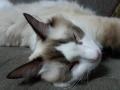 cat2014031900.jpg