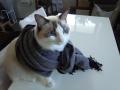 cat2014031902.jpg