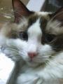 cat2014032000.jpg