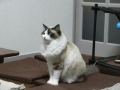 cat2014032001.jpg