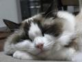 cat2014032002.jpg