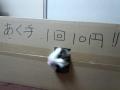 cat2014032004.jpg
