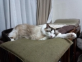 cat2014070500.jpg