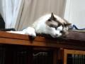 cat2014070700.jpg