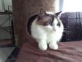 cat2014070701.jpg