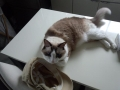 cat2014071500.jpg