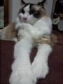 cat2014072500.jpg