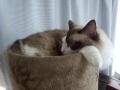 cat2014072501.jpg