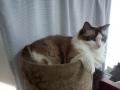 cat2014072600.jpg