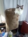 cat2014072900.jpg