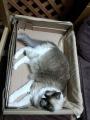 cat2014080303.jpg