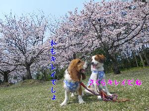 0416kana-nobi1.jpg
