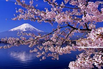 sakura-6415e_convert_20140329145416.jpg