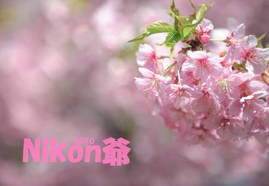 冬桜?Rss