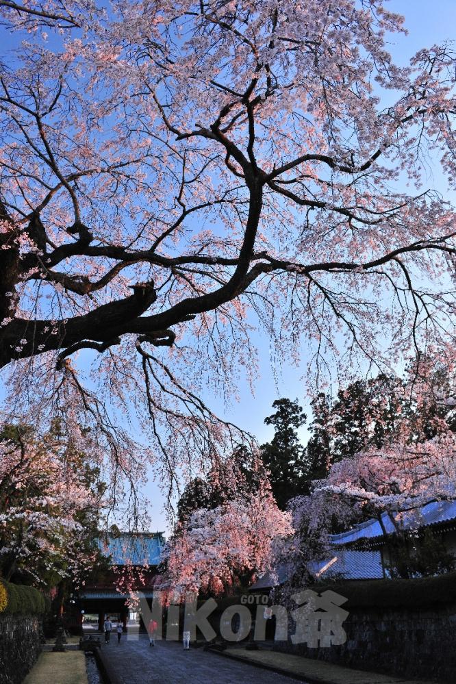 2014 04 05 興徳寺 D3x (173)JS