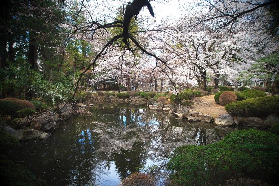 2014 04 06 恵林寺の池 D3x (5)R@S