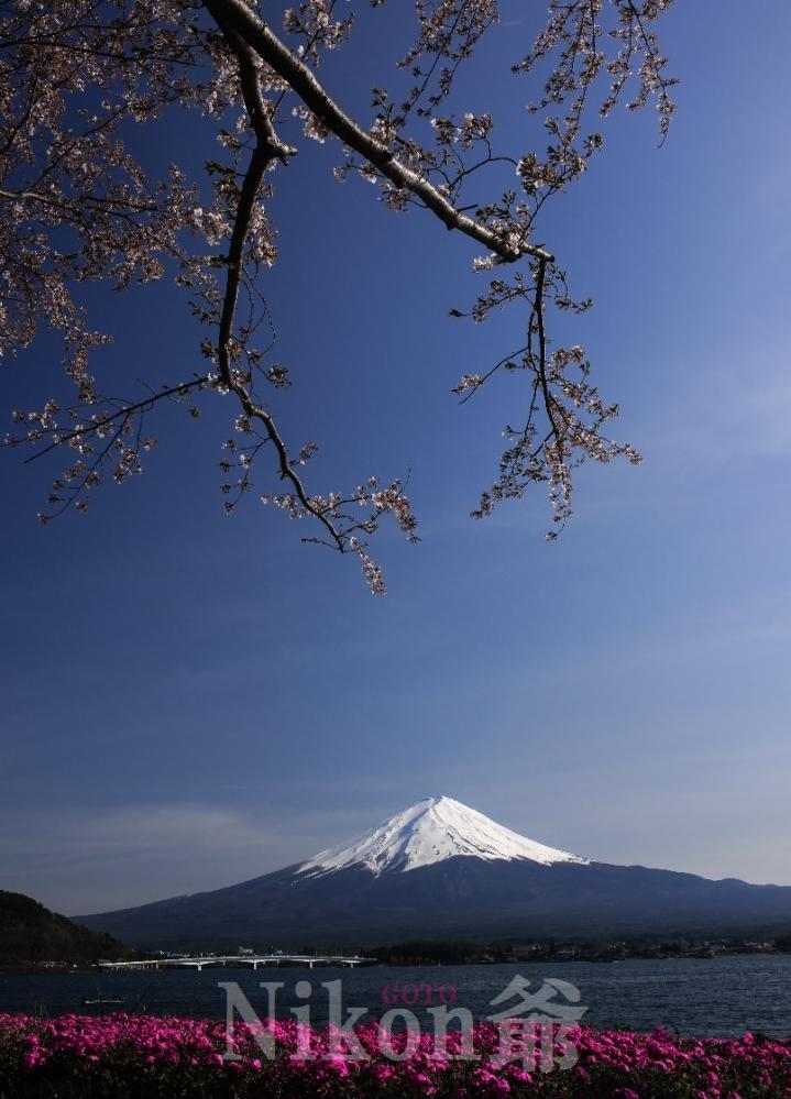 2014 04 27 河口湖 桜 D3x (49)R@_filteredS