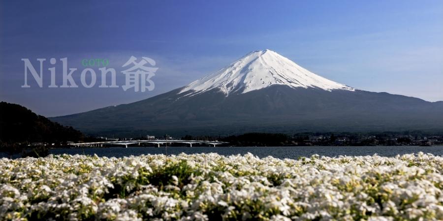 2014 04 27 河口湖 桜 D3x (48)R@_filteredS