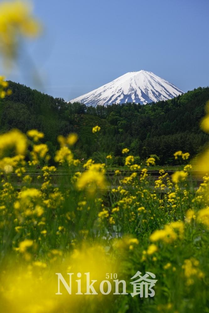 2014 05 24 甘利山 D3x (42)R@S