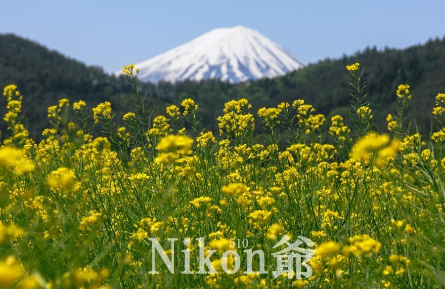 2014 05 24 甘利山 D3x (52)R@S