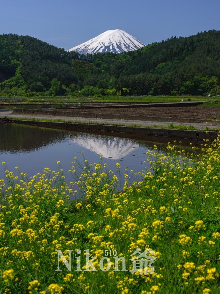 2014 05 24 甘利山 D3x (41)R@S