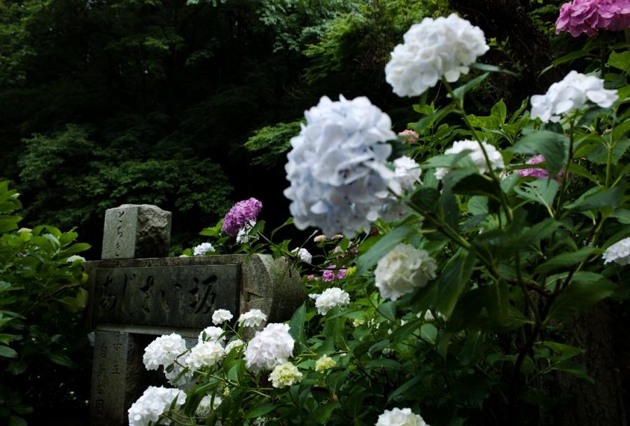 2014 06 22 太平山 紫陽花坂R@s