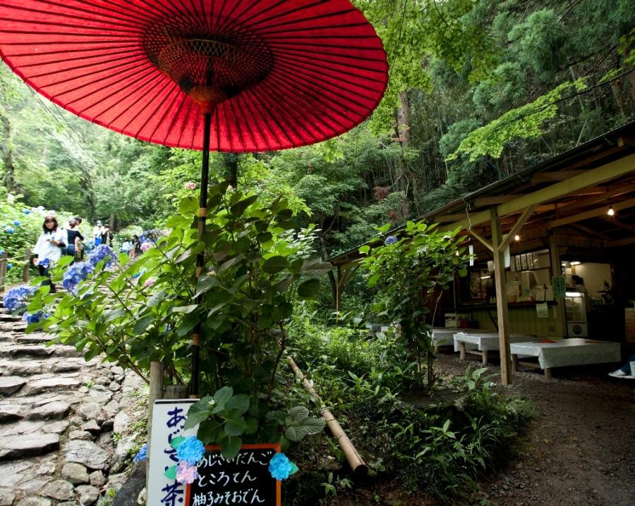 2014 06 22 太平山 赤い傘R@s