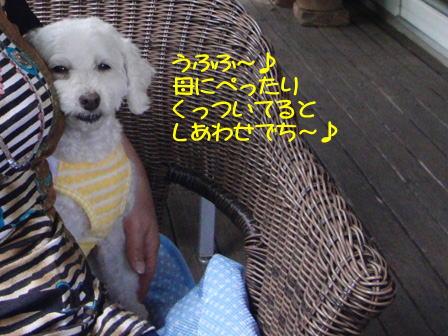 b1464.jpg