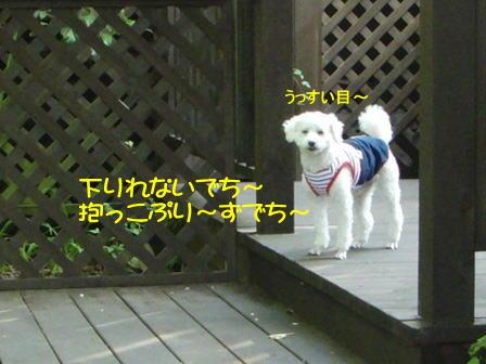 b1501.jpg