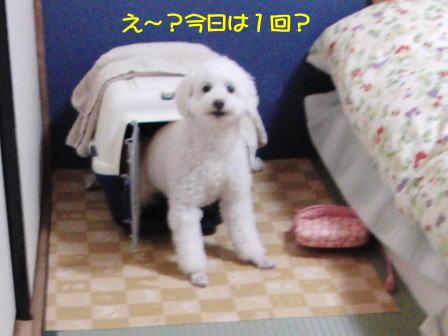 b984.jpg