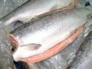 salmontrout_R.jpg