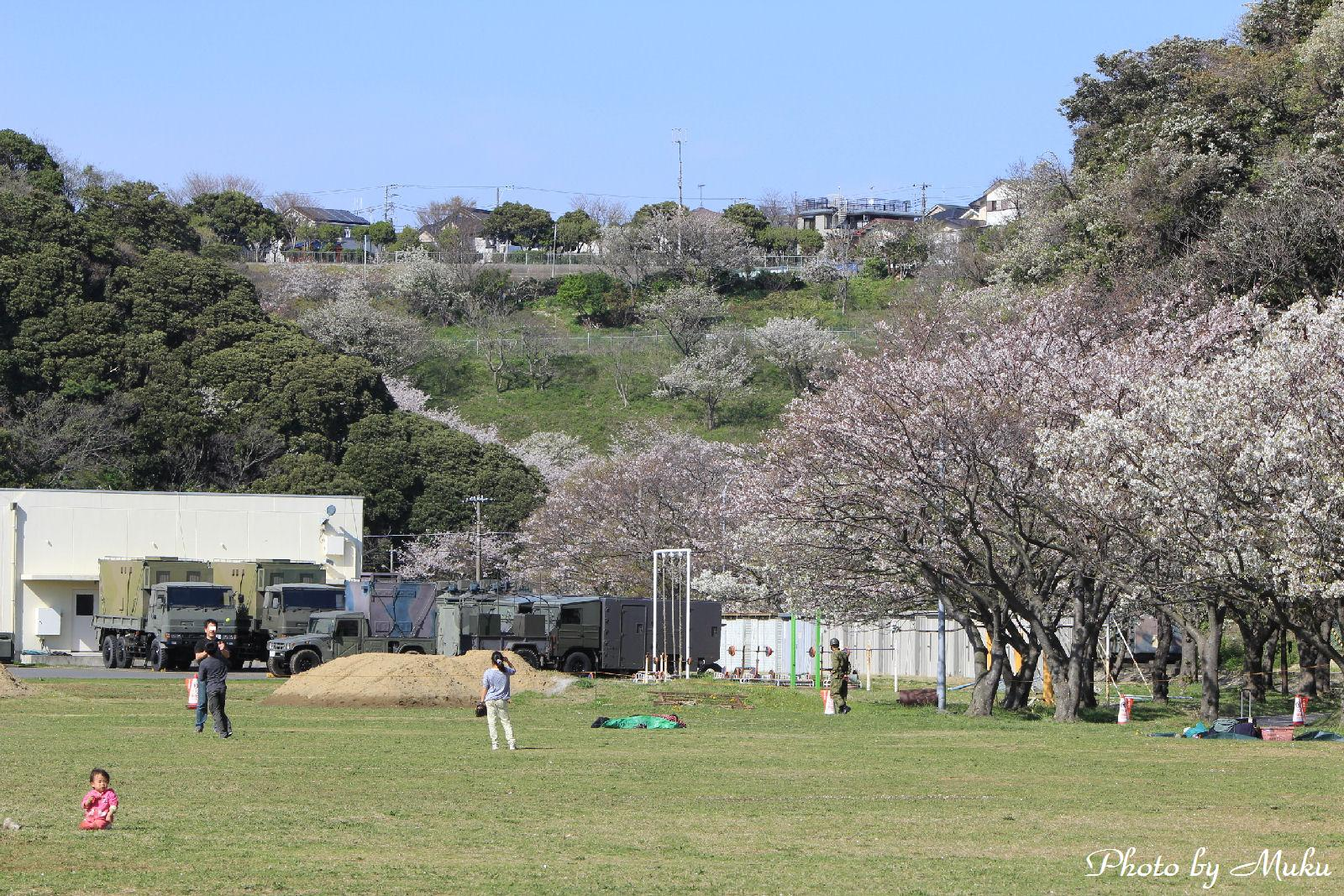 2014.4.5 駐屯地内の桜:陸上自衛隊久里浜駐屯地(神奈川県横須賀市)