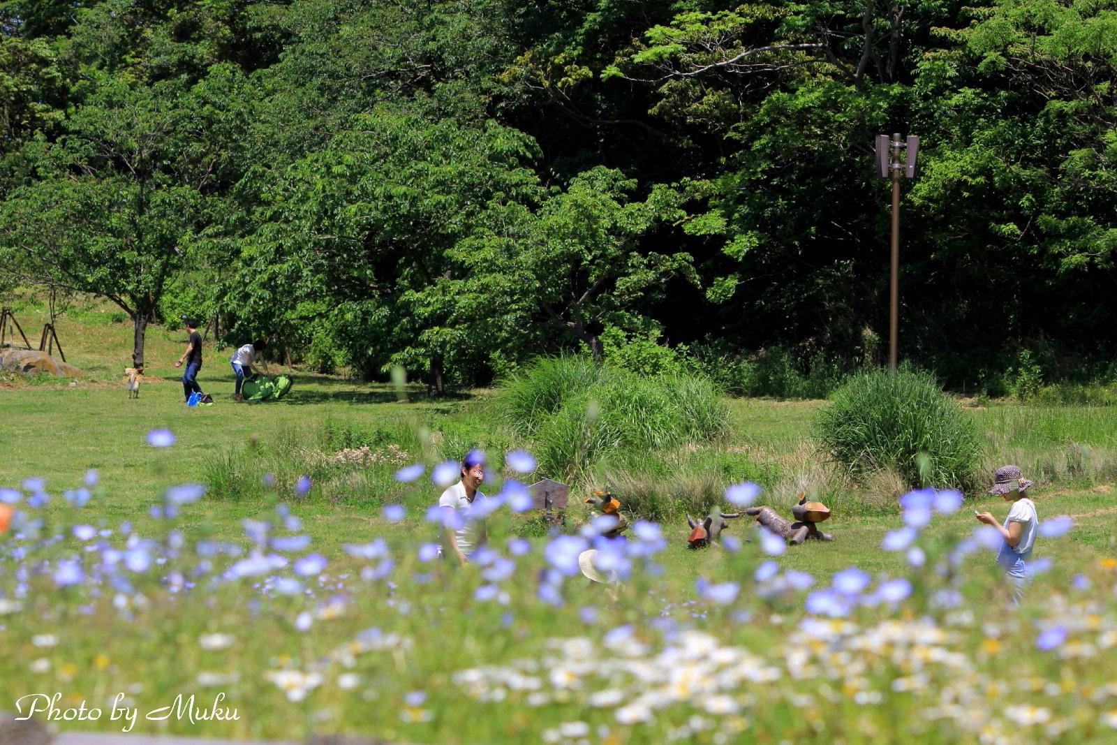 2014/05/18 花の広場(観音崎公園:神奈川県横須賀市)
