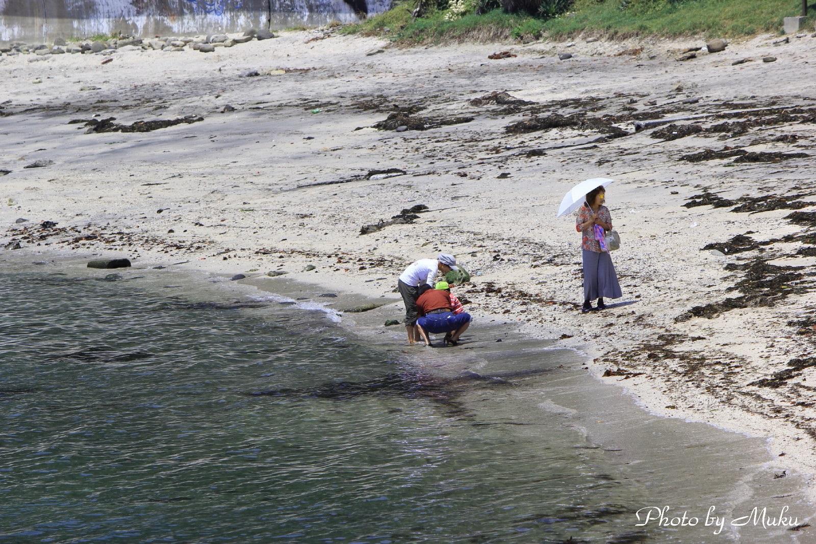 2014/05/29 磯あそび (たたら浜:神奈川県横須賀市)
