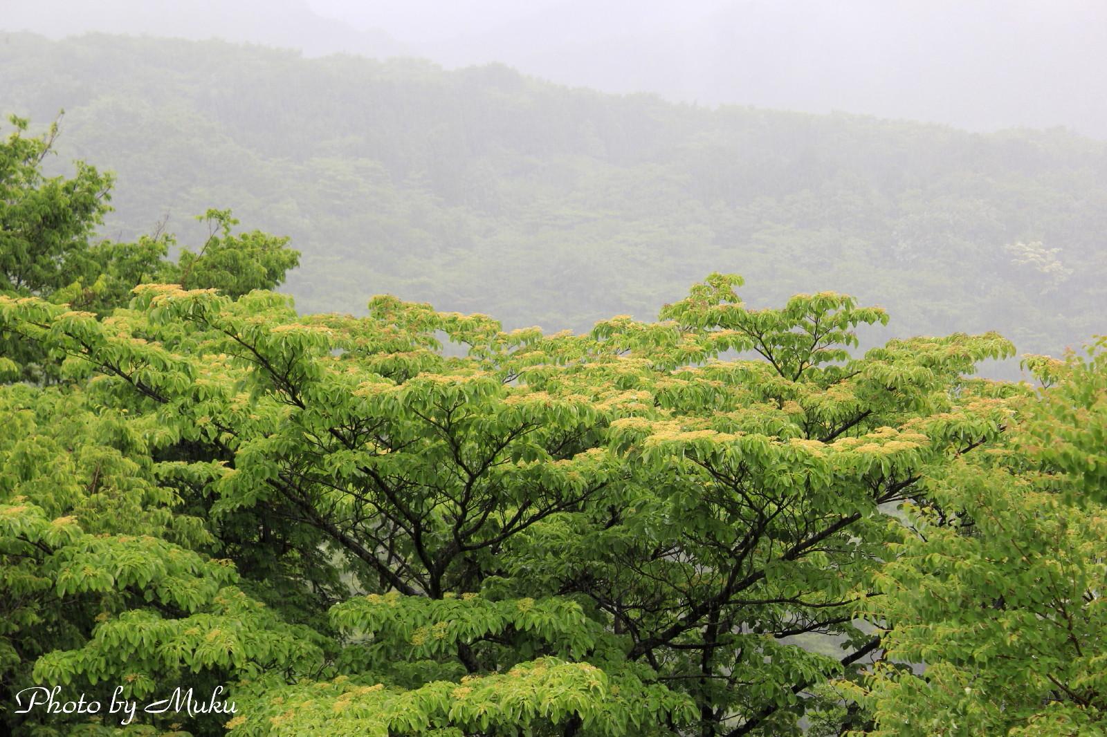 2014/06/06 水木 (箱根:神奈川県横足柄下郡)