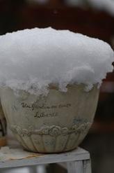 1414ベビーチューリップ雪