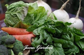 14冬野菜