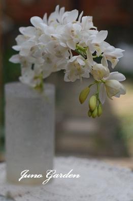 14開花シンピジウム