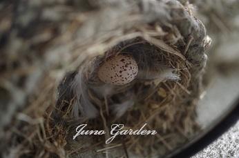 14燕の巣