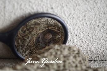 214燕の巣