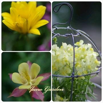 14黄色花