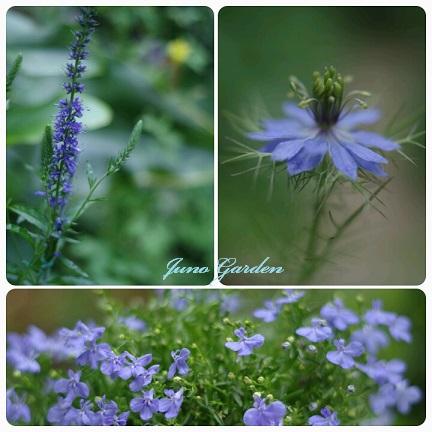 ブルー3種